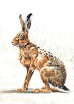 Exhibition Hare