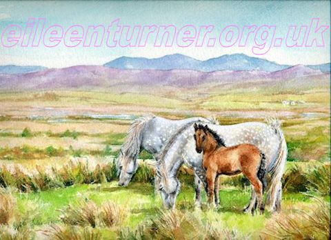 highland ponies and foal