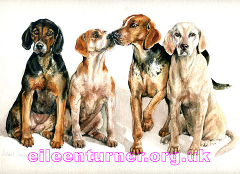 barlow hounds