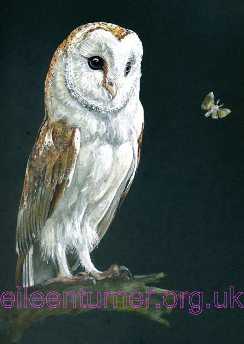 Barn owl and moth