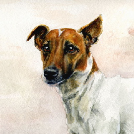 Jack Russell detail