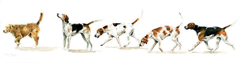 Mr Upton's Hounds