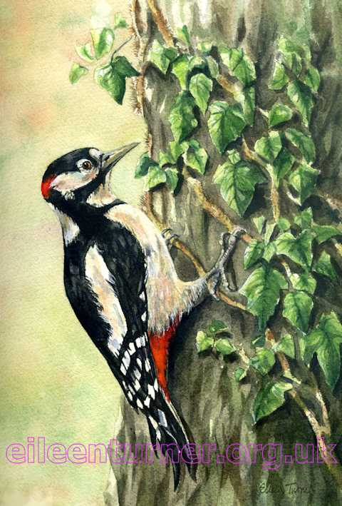 greater gpotted woodpecker
